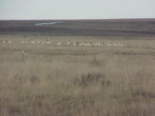 #1: View to the northeast from the confluence, showing antelope.