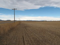#8: The field North of Baseline Road looking West towards the Rocky Mountains