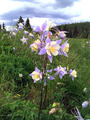 #10: Lots of wild flowers along the way