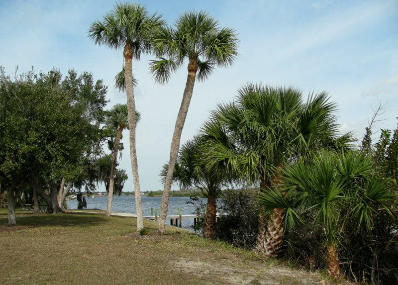 Beautiful Palm trees near the dock