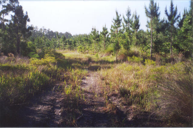 Fire trail to the site