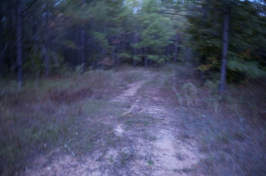 The confluence point lies on this dirt road, within a forest.  (This is also a view to the North.)