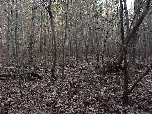 Confluence site in Georgia forest, looking south.