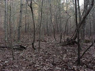 #1: Confluence site in Georgia forest, looking south.