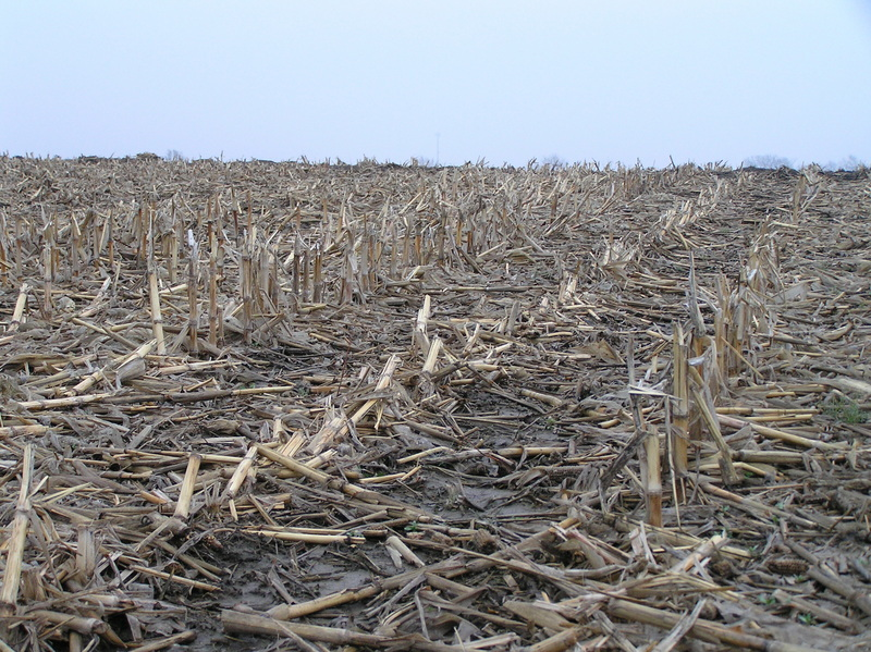 Corn stalks dominate the landscape in this view to the east-northeast from the confluence.