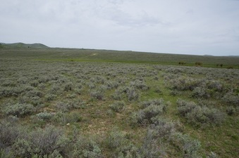 #1: The confluence point lies atop an old road cut, in sagebrush.  (This is also a view to the North.)