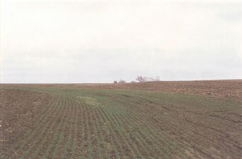 #1: The view east from the confluence, looking toward the Leinberger Rd farm.