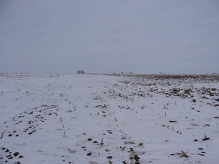 #1: North: slightly undulated field
