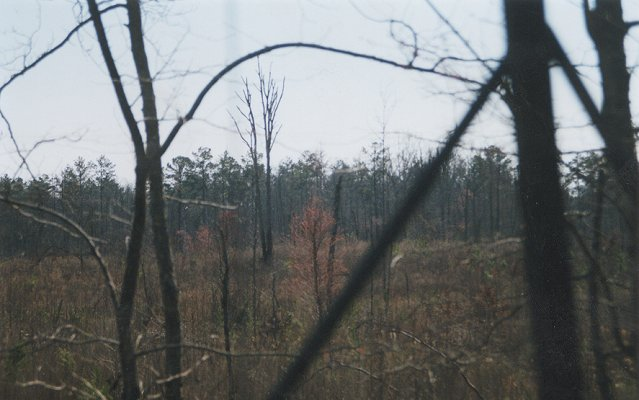 Looking south across clear-cut from a deer stand.  Point is over ridge line behind double tree in left center.