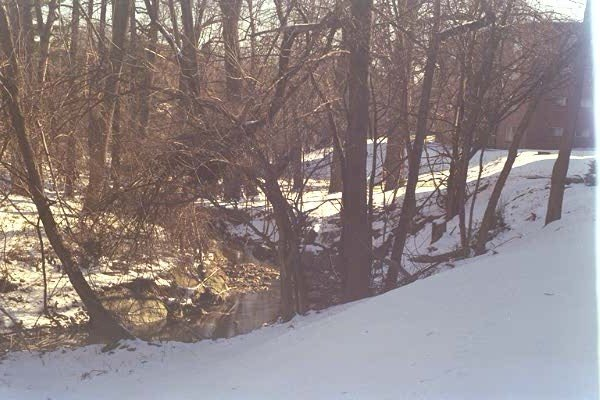 A view of winding Long Branch Creek