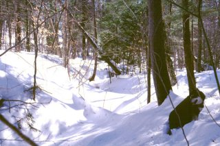 #1: Looking north along a snowy stream bed