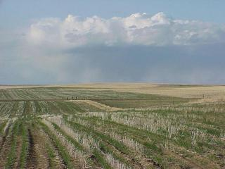 #1: View from the confluence site looking north-northeast across Big Sky Country--Montana.