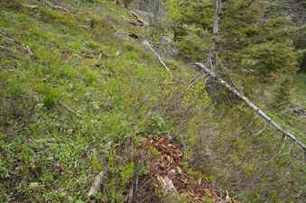 #1: The confluence point lies in a clearing on a steep, east-facing hillside