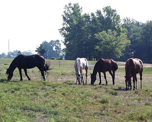 #1: Horses in the pasture, looking east from the confluence