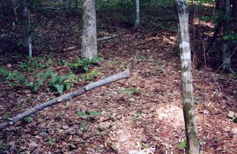 #1: The end of this branch marks the confluence point