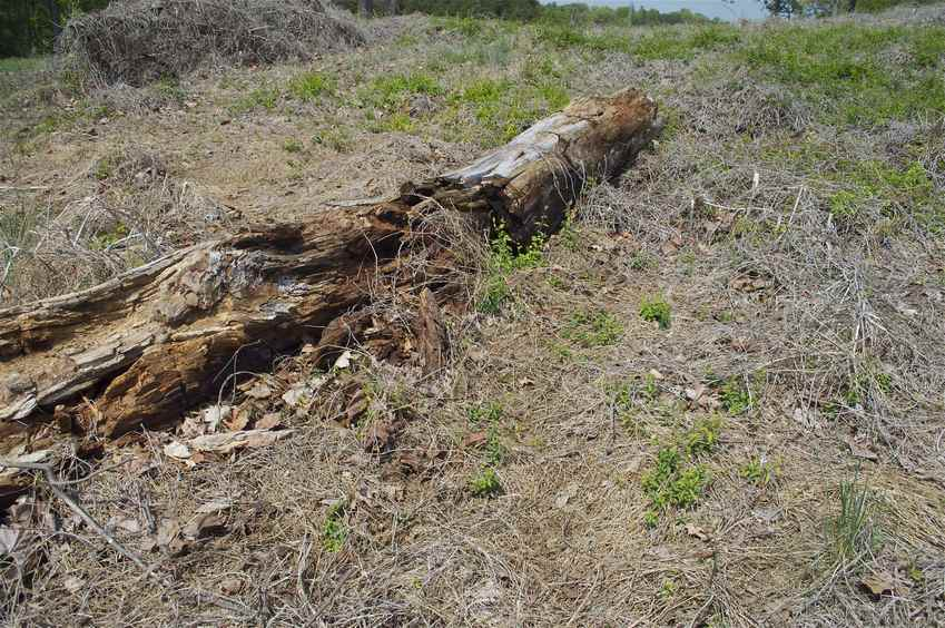 The confluence point lies near this dead log.  This is in common parkland at the edge of a condo complex, next to a lake