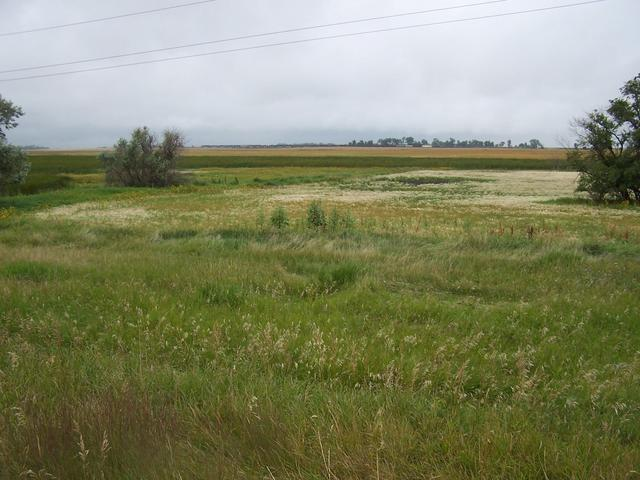 A view North from Highway 2 near Rugby.  Note the distant train travelling East.