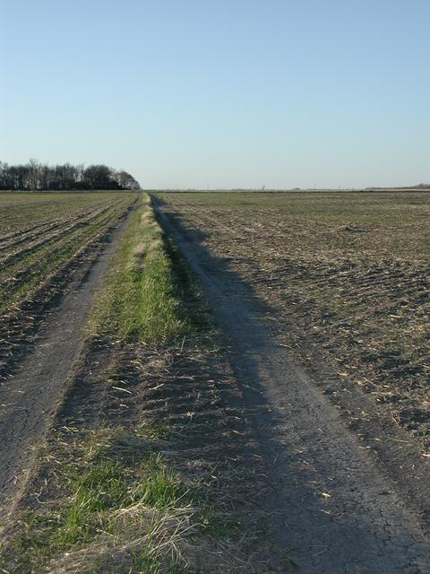 Last stretch of tracks to confluence (facing away from confluence towards gravel road)