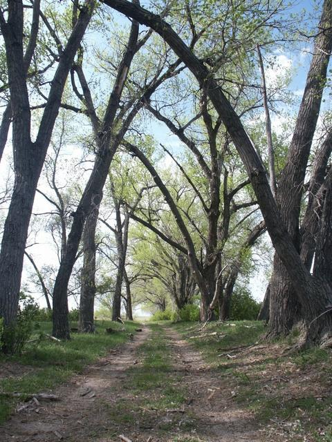 Tree lined lane near confluence
