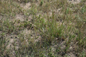 #7: Ground Cover at 42N 101W