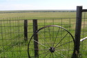 #8: Fence and wagon wheel, about 150 meters south-southwest of the confluence, looking east-northeast.