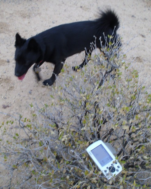 Dog, and GPS