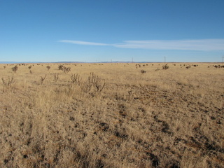 #1: North - cows can be seen in the distance on the left