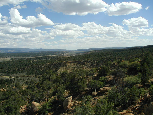 View South along Rio Puerco