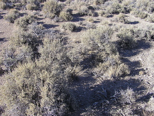 #1: The confluence point lies amidst desert sagebrush (like so many other confluence points in Nevada)