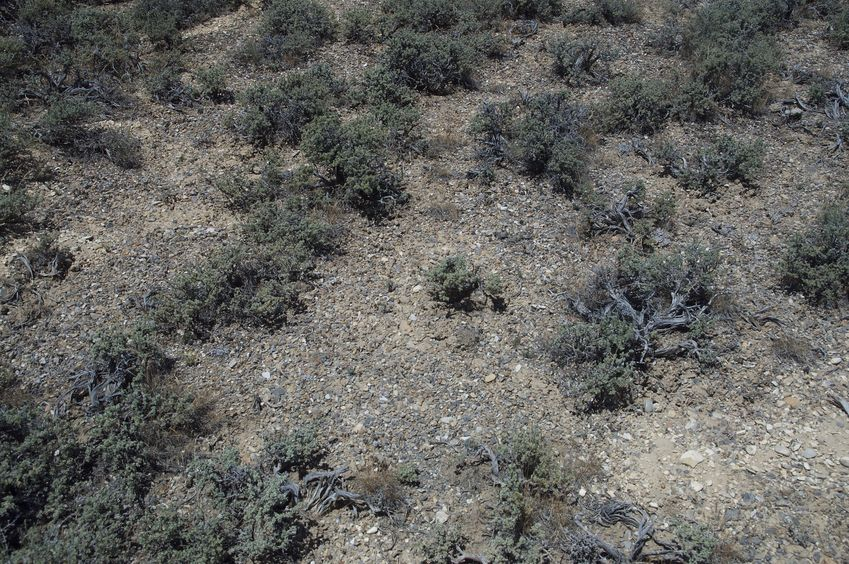 Yet again, desert sagebrush!