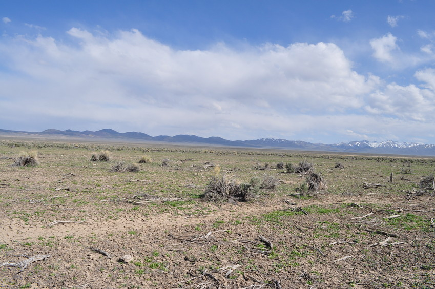 View East (towards the Toiyabe Range)
