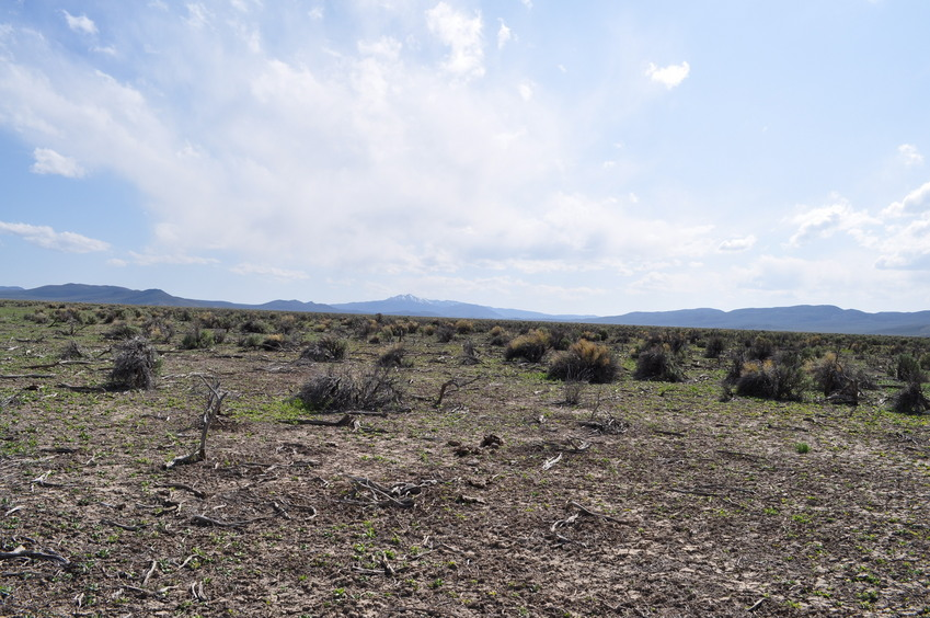 View South (down Carico Lake Valley, towards the Toiyabe Range)