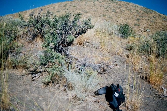 This sagebrush plant marks the spot.