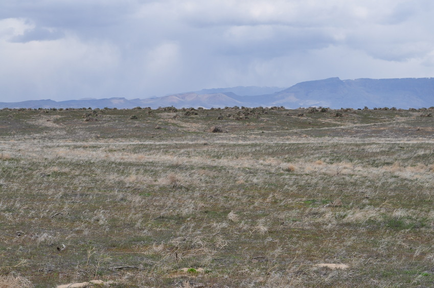 View North (towards the Owyhee Bluffs)