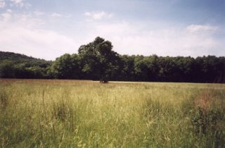 #1: A tree in a field