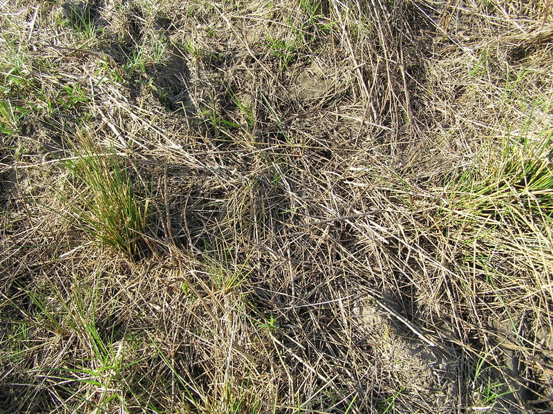 Grassy vegetation in the field that the confluence occupies, but perhaps not for long.