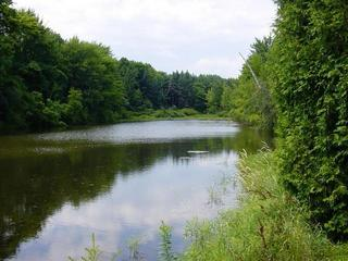 #1: The Confluence point is just east of this pond