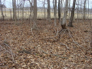 #1: 40N 84E lies in bare woods just east of the North Dayton – Lakeview Road.