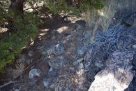 #5: The confluence point lies at the base of a small pine tree, at the bottom of a scree slope
