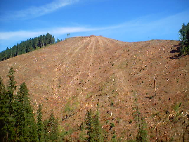 View of the Clearcut Hill to the East