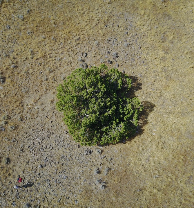 An overhead (drone's-eye) view of the 'confluence tree'