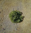 #8: An overhead (drone's-eye) view of the 'confluence tree'