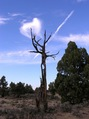 #8: A dead tree alongside the Badlands Rock Trail