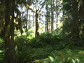 #10: Nationalpark Olympic Mountains.JPG -- Olympic National Park