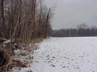 #1: Site of 40 North 76 West, looking northeast along the treeline.