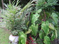 #8: The confluence spot is in the center of this assortment of plants.