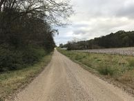 #9: View to east along road near the state line, with Tennessee on left, Alabama on right.