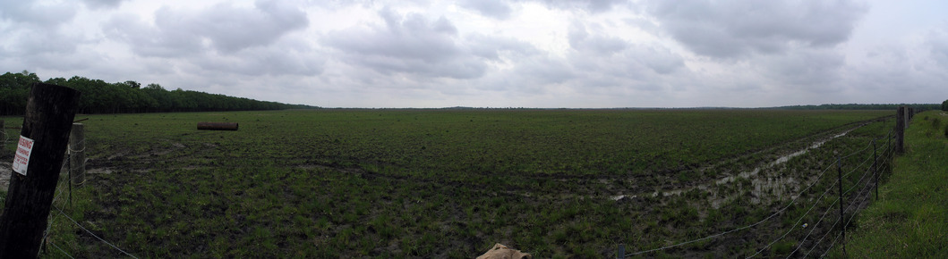 Panorama showing the field with the confluence