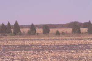 #1: View from the confluence toward the north, Burlington water tower on horizon, juniper patch (10/1999)
