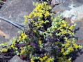 #6: Yellow flowers at site